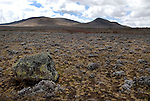Shrub and Rock Habitat, Sanetti Plateau, 4,000 m above sea level, Bale Mountains National Park, Ethiopia, high altitude, Africa