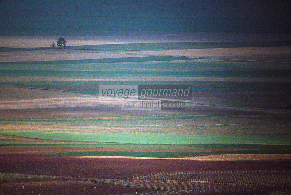 Europe/France/Champagne-Ardenne/51/Marne/Ville-Dommange: Le vignoble champenois