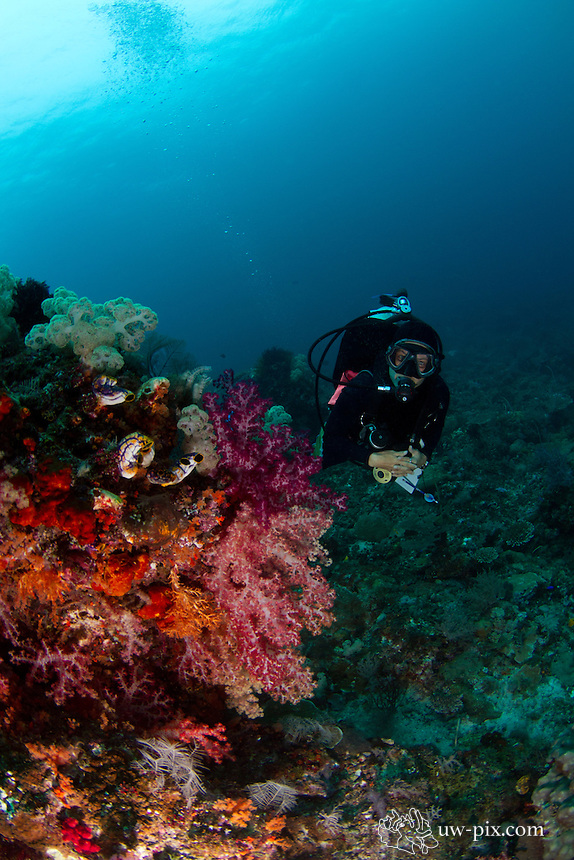 female diver with beatiful soft corals - Raja Ampat