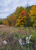 Fall color shows in the forest at Ryerson Woods Conservation Area in Lake County, Illinois