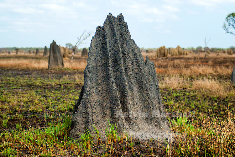 Magnetic Termite Mounds,Built by termites, they are amazing architectural feats complete with arches, tunnels, chimneys, insulation and nursery chambers. The mounds are aligned north to south to minimise the exposure to the sun. Lakefield National Park - Cape York Peninsula, Far - North Queensland.