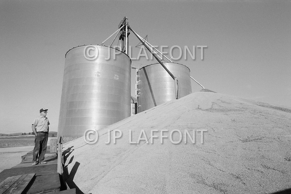 1978, Idaho, USA --- The wheat harvest in Idaho. The production of wheat is so high that warehouses are unable to store the produce correctly, often off-loading on the ground directly. --- Image by © JP Laffont
