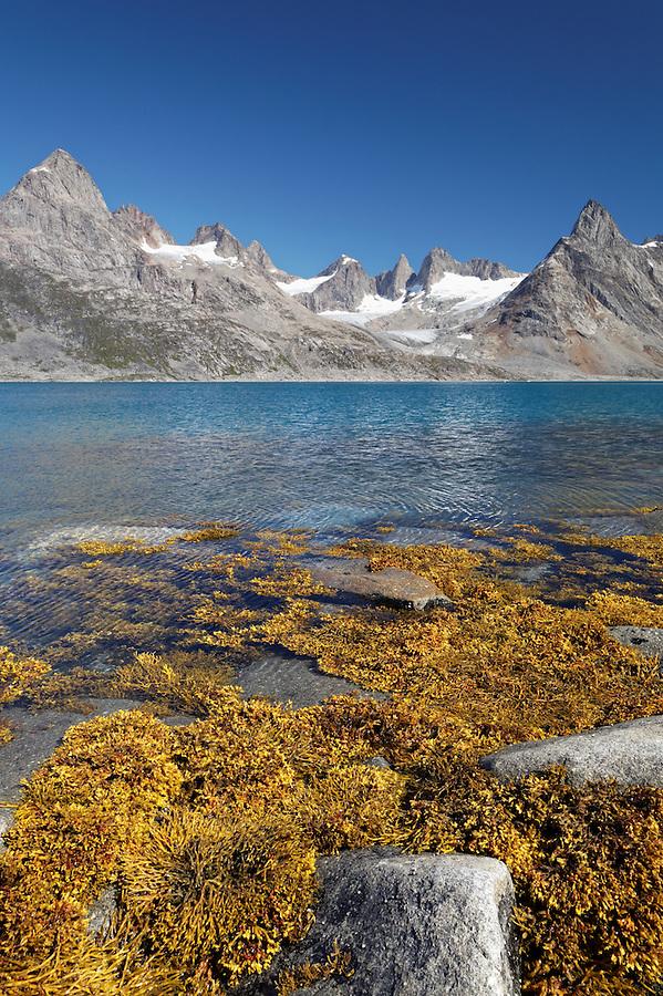 Kelp on beach, Ikaasatsivaq Fjord, Ammassalik Island, East Greenland