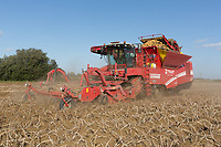 Potato harvesting in South Lincolnshire<br /> Picture Tim Scrivener 07850 303986<br /> &hellip;.covering agriculture in the UK&hellip;.