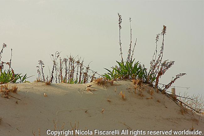 Sand dunes on New Jersey costline Coastal sand dunes and sand fencing at Silver Beach New Jersey .