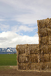 Oregon, Grant County, Pacific Northwest, U.S.A., ranch country, spring wheat, baled hay, Blue Mountains, spring,