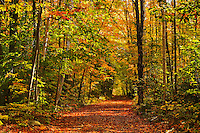 Autumn colors on country road<br /> Haliburton<br /> Ontario<br /> Canada