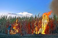 Trabalhador queimando canavial, municipio de Rio Tinto. Paraiba. 2014. Foto de Kleide Teixeira.