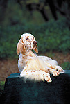 english setter Shopping cart has 3 Tabs:<br />