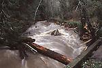 Laguna Creek at high water in Bonny Doon