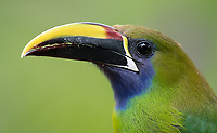 Many of Costa Rica's lodges have feeders that attract colorful birds.