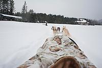 Dog sledding Ski Fest Tremblant Quebec, Canada