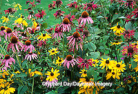 63821-063.06 Purple Coneflowers (Echinacea purpurea), Black-eyed Susans (Rudbeckia hirta), Red Bee Balm (Monarda didyma)  IL