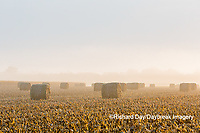 63801-07701 Hay bales in field on foggy morning, Marion Co. IL