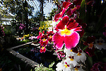 FEATURES - The Orchid Show at the Botanical Garden in Bronx, New York