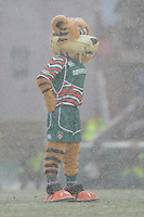Welford, the Leicester Tigers mascot, in the snow before the Heineken Cup 6th round match between Leicester Tigers and Stade Toulousain at Welford Road on Sunday 20th January 2013 (Photo by Rob Munro).