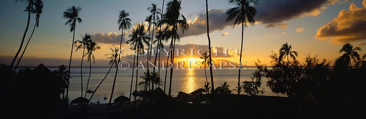 Coconut Palms at sunset. Tahiti.