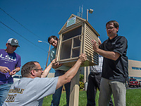 """NWA Democrat-Gazette/ANTHONY REYES @NWATONYR<br /> Brian LeBlanc (from left) James Hales, Jacob McConnell, Blake Murray and Brian Braithwaite, all with the 22nd class of Leadership Springdale install a """"Little Free Pantry"""" Monday, May 8, 2017 at the Springdale Police Department in Springdale. The pantry is the Leadership class' special project they designed, raised the money for and installed. The group installed five pantries around Springdale. One each at the Jones Center, Springdale Housing Authority, Springdale Police Department, Elmdale Baptist Church and the Iglecia Ministerio Pentecostal."""