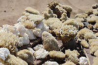DJIBOUTI salt lake Lac Assal, selling salt crystal and minerals for tourists / DSCHIBUTI, Salzsee Lac Assal