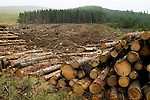 Logged trees and clear cut, Glen Isla, Scotland, United Kingdom