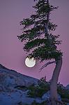 Tahoe Rim Trail -Echo Lake - Truckee