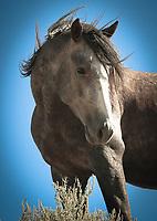 Free Rein - North Dakota - Teddy Roosevelt NP - Wild Horse