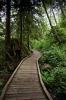 Winding wooden walkway along forest trail. Lynn Valley canyon park, North Vancouver, British Columbia, Canada.