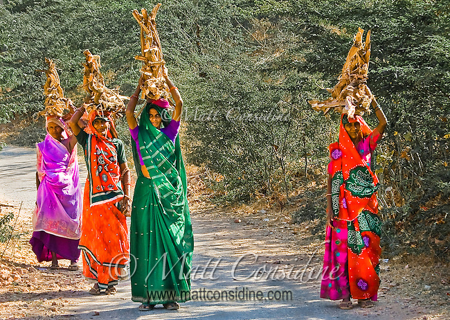 Rajasthani women with colorful saris carrying firewood in rural India.<br /> (Photo by Matt Considine - Images of Asia Collection)