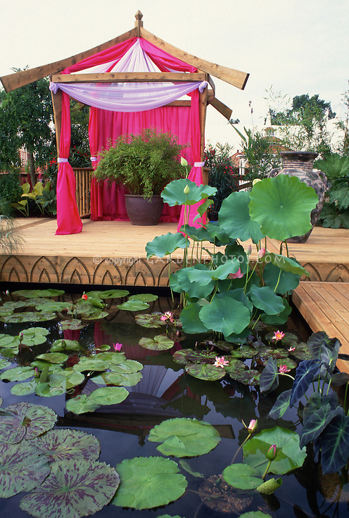 Nelumbo nucifera (Water lotus), Colocasia (Taro), Nymphaea (Water Lilies) in pond set in two tiered deck with pink fabric gazebo