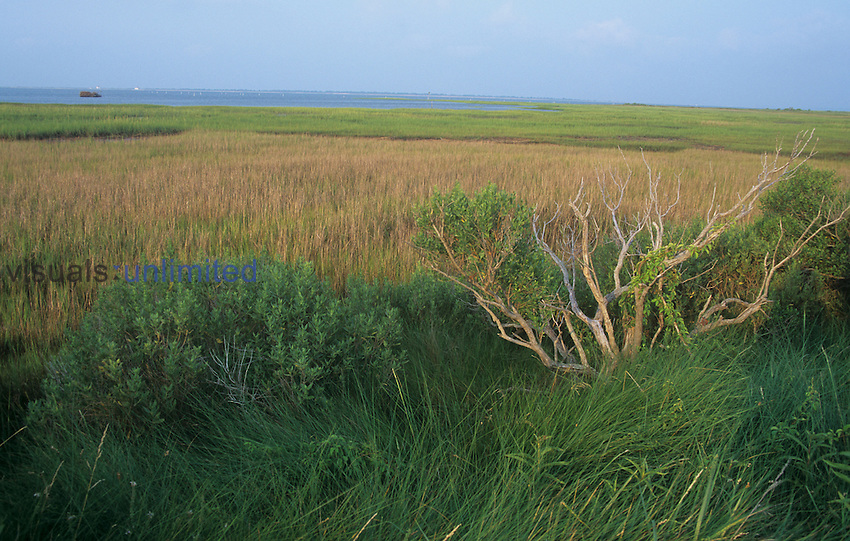 Saltmarsh habitat, Chincoteague National Wildlife Refuge, Virginia, USA.