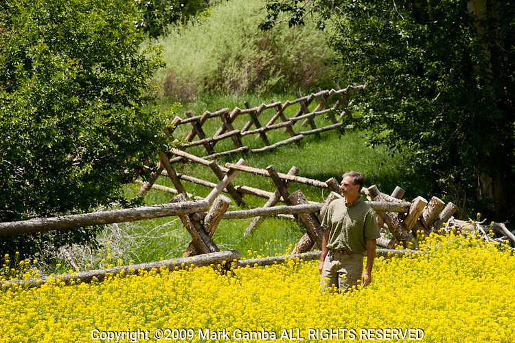 Jude Trapani walking through mustard while inspecting a riparian area protection fencing along the East Fork of the Salmon River.