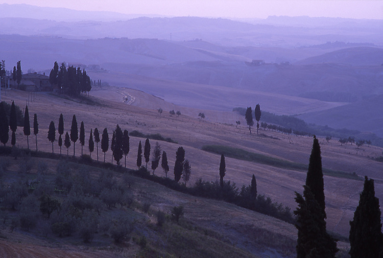 Europe, ITA, Italy, Tuscany, Volterra, Landscape, Typical cypress in the morning light, twilight, Cupressus sempervirens....[ For each utilisation of my images my General Terms and Conditions are mandatory. Usage only against use message and proof. Download of my General Terms and Conditions under http://www.image-box.com or ask for sending. A clearance before usage is necessary...Material is subject to royalties. Each utilisation of my images is subject to a fee in accordance to the present valid MFM-List...Contact | archive@image-box.com | www.image-box.com ]
