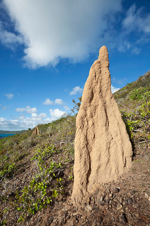 Termite mound overlooking the coast.  Thursday Island, Torres Strait Islands, Queensland, Australia