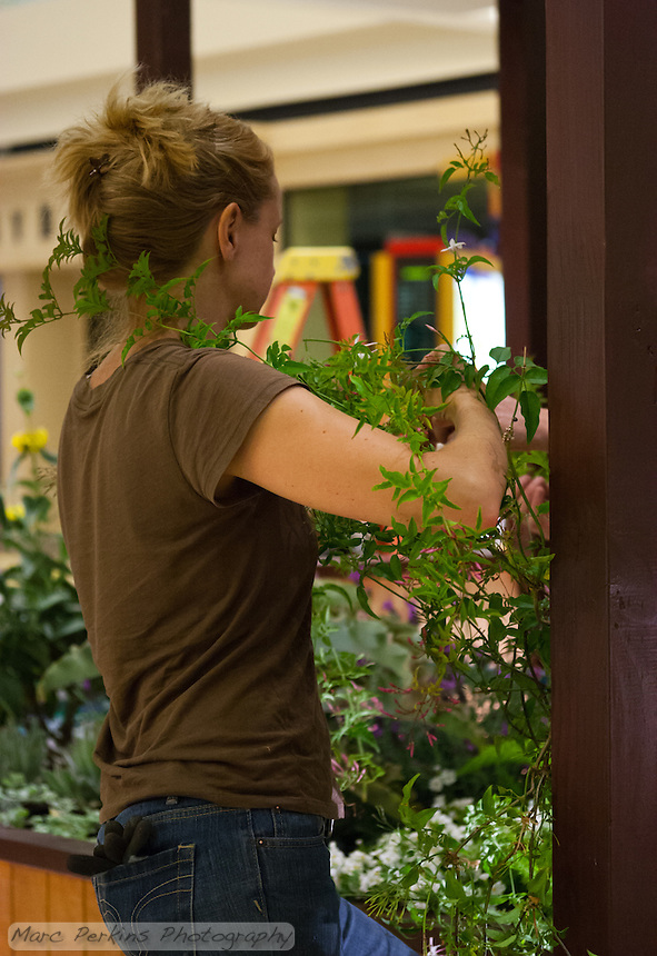 """Ute Smith works to artfully wrap a vine around a post at Orange Coast College's Ornamental Horticulture Club's in-progress installation at the 2012 South Coast Plaza Spring Garden Show in Costa Mesa, CA.  The theme for this year's show is """"healing gardens"""", and the OCC team is installing a """"garden for the blind,"""" which will be complete with a braille world globe and braille labels.  This picture was taken Tuesday April 25, 2012 at ~11pm, as the team was working frantically to meet their Thursday-morning deadline.  This image was taken at a high ISO using the ambient light in the dim mall, so it's noisier than my typical images (and thus I'd recommend against printing it large)."""