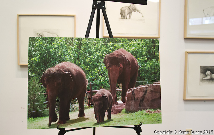 An image of elephants from the Oklahoma City Zoo on display during a press conference at the Woodland Park Zoo.  Woodland Park Zoo officials announced at a press conference Friday that 48-year-old Bamboo and 36-year-old Chai will be moved to the Oklahoma City Zoo in late March to mid-April. (photo © Karen Ducey Photography)