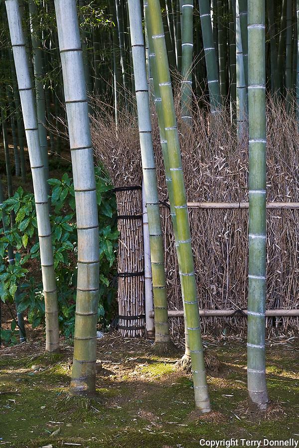 Kyoto City, Arashiyama District, Japan<br /> Arahaiyama Tenryuji temple, garden detail of fence line in the bamboo forest