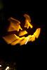Kotler Halloween