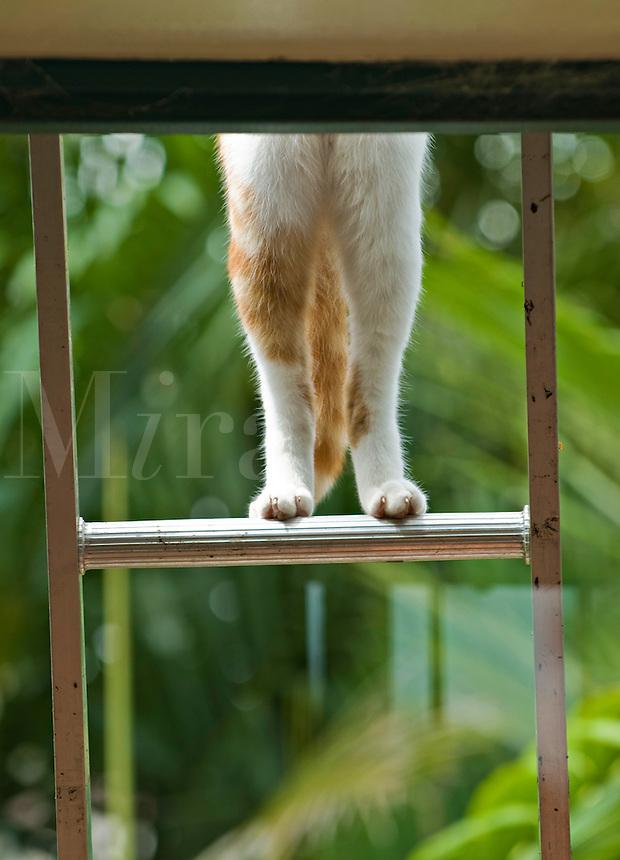 Cat climbing on a ladder