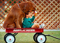 Boy gives his golden retriever a taste of his ice cream cone as they sit in a red wagon.