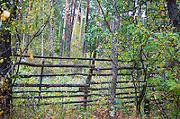 A fence in the Polish National Forest.  Zawady  Central Poland