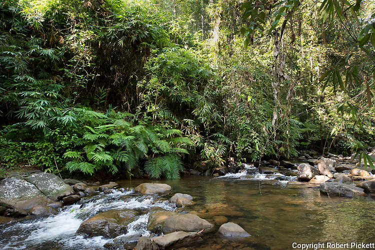 Forest River in Sinharaja World Heritage Site, Sri Lanka