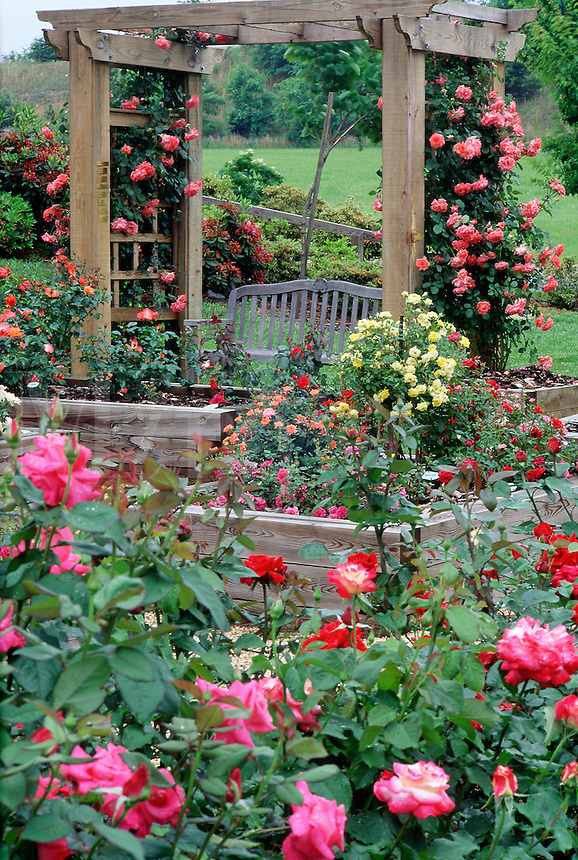 Senior Center garden with roses on trellis and bench #5854. Virginia.