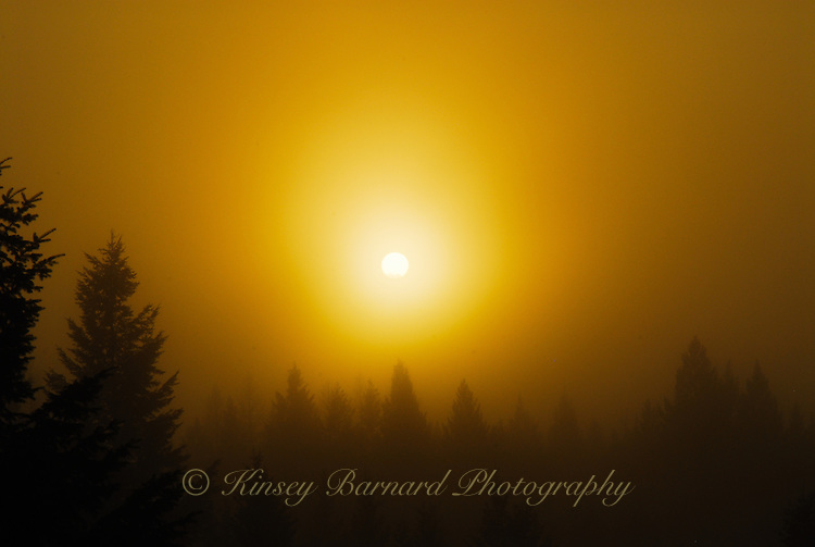 &quot;WINTER GOLD&quot;<br /> <br /> Golden winter sunset in the Kootenai National Forest, Montana