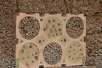 Nisthilfe für Wildbienen, Bienen, Solitärbienen und Wespen, Lehm, hohle Schilfstängel, Bohrlöcher bieten Nistmöglichkeiten für Insekten, Schornsteinwespe, Schornstein-Wespe, Odynerus spec. hat aus Lehm eine Röhre zum Nesteingang gebaut