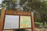 Israel, Hameginim forest in the Shephelah