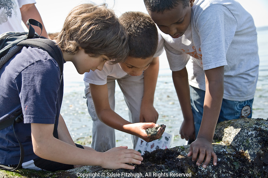 Fourth-graders spend the morning on the shore of Puget Sound, discovering the creatures of low tide.