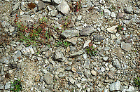 Detail of the schist slate schistose and gravelly soil in the vineyard of Domaine du Closel Chateau des Vaults, Savennières Maine et Loire France