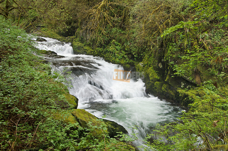 Cascading waterfall on Sweet Creek; Siuslaw National Forest, Coast Range Mountains, Oregon.