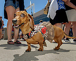 Prairie Meadows celebrated Fathers Day with its first ever first Wiener Dog Races. The four-legged competitors and their owners hit the starting gate in a 30-yard dash for cash prizes and a shot at the Wiener's Circle. Fast is important in racing but so was the fashions.