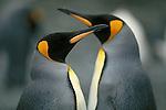 Penguin Species